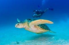 绿浪乌龟和轻潜水员 库存图片