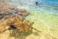 绿浪乌龟在海洋-毛伊,夏威夷 库存照片