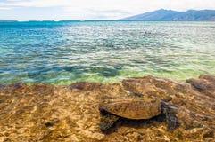 绿浪乌龟在海洋-毛伊,夏威夷 免版税库存照片