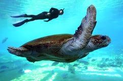 绿浪乌龟昆士兰澳大利亚 免版税库存图片