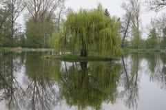 浪漫公园,在水,村庄阿卡迪亚波兰的一棵树 免版税库存图片