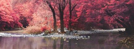 浪漫反射在森林的一个美丽的池塘印象在红外线 库存图片