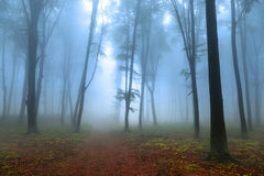 浪漫大气在有雾的森林里 免版税库存照片