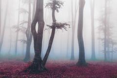浪漫大气在有雾的森林里 库存图片