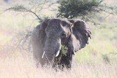 浪漫大象 免版税库存照片