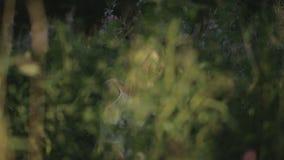 浪漫妇女在森林里 影视素材