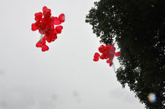 浪漫婚姻夫妇婚礼标志爱33 免版税库存图片