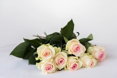 浪漫开花的嫩奶油色玫瑰 心爱的花束只 所有欢乐事件的概念,生日,华伦泰` s 库存图片