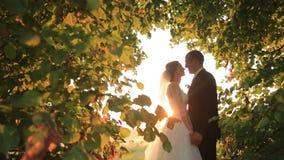 浪漫新婚佳偶新娘和新郎份额亲吻在日落的惊人的绿色公园 股票录像