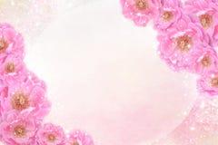 浪漫桃红色玫瑰开花在软的闪烁背景的边界在淡色口气的华伦泰或喜帖的 免版税库存照片