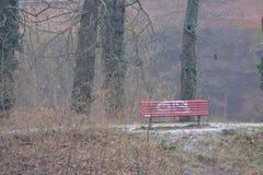 浪漫步行在新生设防后的森林在柏林 免版税图库摄影