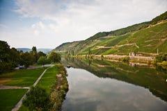 浪漫河Mosel的小山的葡萄园在summe渐近 免版税库存照片