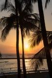 浪漫热带夏威夷威基基海滩和棕榈树现出轮廓在日落 库存照片