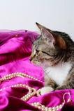浪漫猫 库存照片