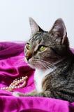 浪漫猫 免版税图库摄影