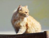 浪漫猫 免版税库存图片