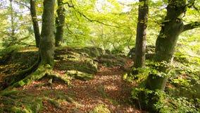 浪漫的森林 图库摄影
