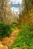 浪漫石海滩道路灌木和植物 免版税图库摄影