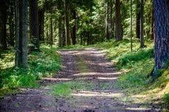 浪漫石渣路在绿色树森林里 免版税库存照片