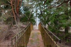 浪漫老桥梁在杉木森林里 免版税库存图片