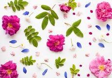 浪漫舱内甲板被放置的花卉背景 免版税库存照片