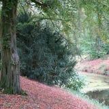 浪漫风景有老树的北部德国,五颜六色的地方教育局 免版税库存照片
