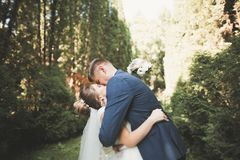 浪漫,童话,拥抱和亲吻在公园,树的愉快的新婚佳偶夫妇在背景中 免版税库存照片