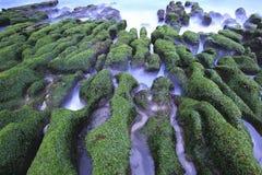 浪潮垄沟,与绿色海草的石沟槽 图库摄影