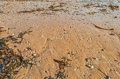 浪潮清扫了与壳、海草和小卵石的海滩 库存图片