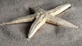 浪潮洗涤的海星 库存图片