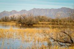 浪端的白色泡沫凹道风景在亚利桑那 免版税图库摄影