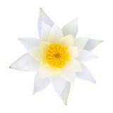 浪端的白色泡沫百合莲花 免版税图库摄影