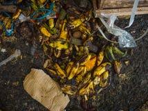 浪费腐烂的香蕉被放弃以传统市场为基础在雅加达印度尼西亚 库存图片