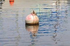 浮体在水中 库存图片