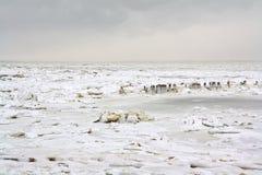 浮冰冰海运wadden 库存照片