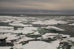 浮冰块在北极海 免版税图库摄影