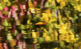 浮动叶子抽象反射Wenatchee河华盛顿 库存图片