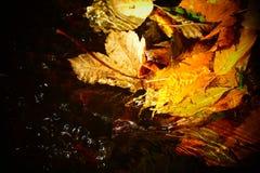 浮动在水的秋叶 库存照片