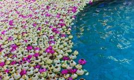 浮动在池的白莲教 库存图片