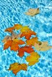 浮动在池的秋天叶子 库存图片