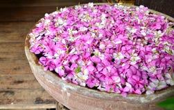 浮动在碗的桃红色花 库存照片