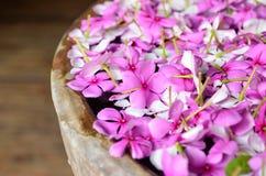 浮动在碗的桃红色花 库存图片