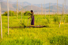 浮动庭院在Inle湖,缅甸 免版税图库摄影