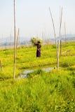 浮动庭院在Inle湖,缅甸 免版税库存照片