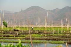 浮动庭院在Inle湖,缅甸 库存照片