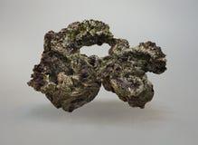 浮动有机岩石 免版税库存图片