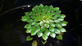 浮动植物 库存照片