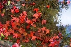 浮动槭树叶子 免版税库存图片