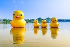 浮动橡胶鸭子在湖 图库摄影