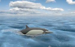浮动海豚 免版税库存图片